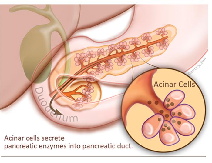 Pancreatitis aguda / Grupo de Estudio de Enfermedades Pancreáticas
